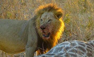 Chobe National Park Safari Day Trip from Vic Falls