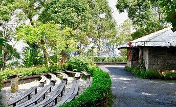Nature Walk at Penang Hill