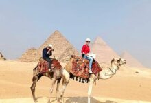 Camel Ride at the Pyramids (Includes BBQ Dinner)