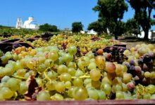 d8 107 220x150 - Santorini Semi Private Wine Tour