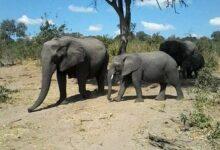 f3 105 220x150 - Full day Chobe safari