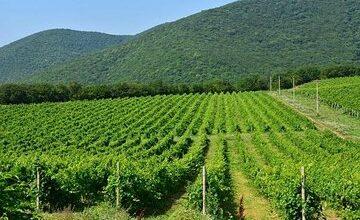 Wine tour to Russian Champagne House Abrau-Durso