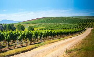 Full Day Tamar Valley Wine Tour